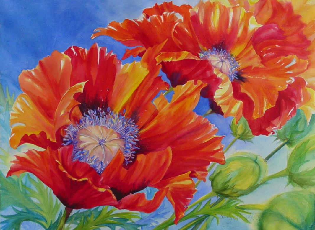 Watercolor painting of orange poppies against a blue background