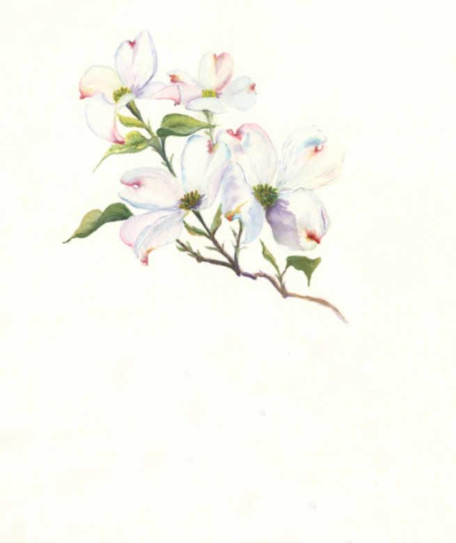 Dogwood flower painting
